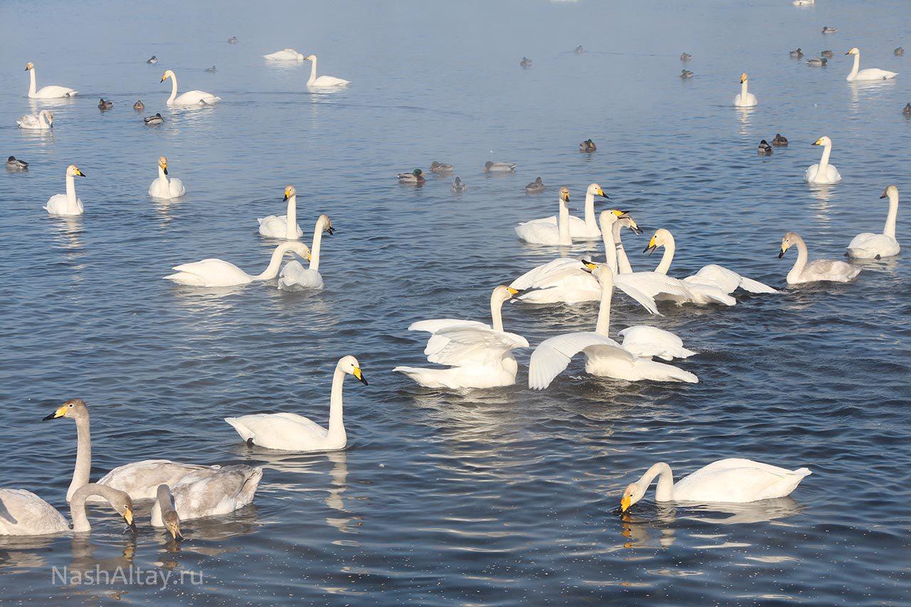 Лебединое (Светлое) озеро