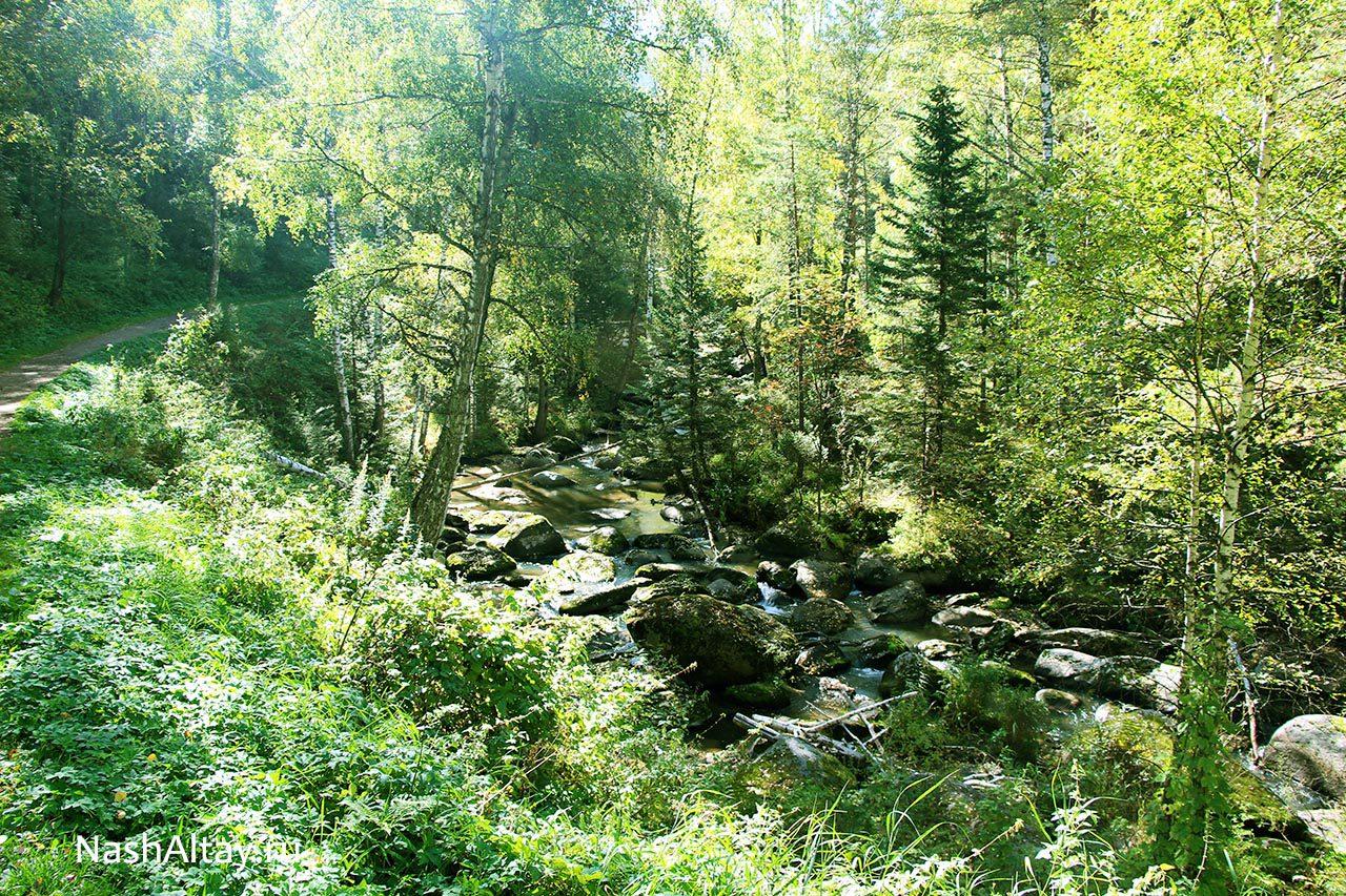 Терренкур вдоль реки Белокуриха
