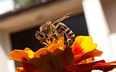 Медовый туризм на Алтае «сон на пчелах»