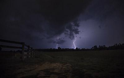 Какие деревья больше подвержены молнии?